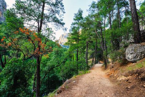 Yazl Kanyon Tabiat Park