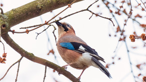 Наблюдения за птицами - Март 2021