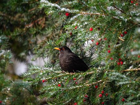 Птицы - Зима 2021