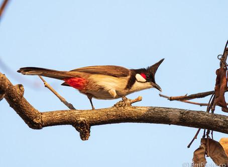 Птицы Таиланда