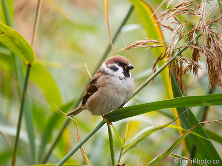 Птицы октябрь