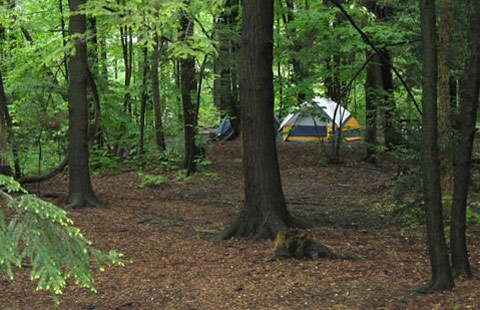 Tent Sites in the Woods