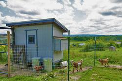MMP_Fenced_goats_640x425_80