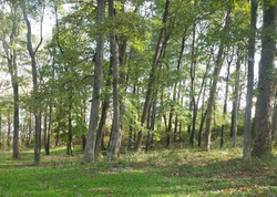 wooded campground