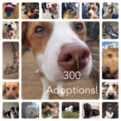 300 Adoptions!