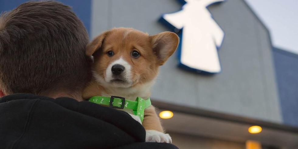 2nd Annual Dog Adoption at Dutch Bros