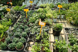 herbs-in-garden-center-Optimized