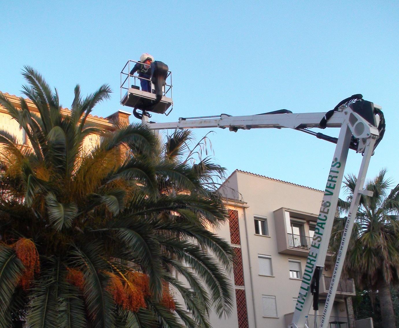 traitement palmier nacelle.
