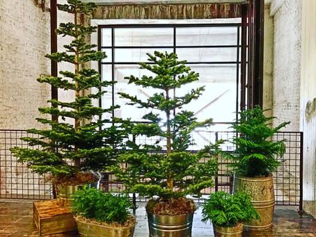 North Georgia Holiday Event Guide - Christmas Tree Lighting!