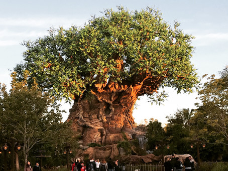 Walt Disney World Marathon Weekend - Animal Kingdom and Marathon Expo (Again)