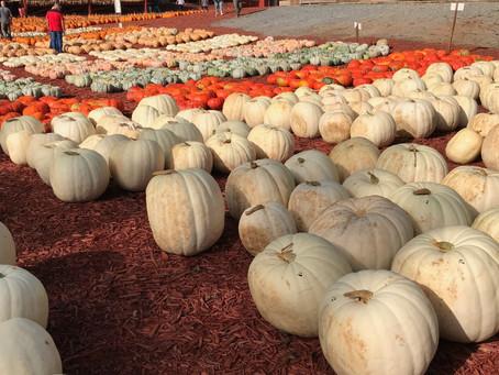 Adventures in North Georgia - Burt's Pumpkin Farm