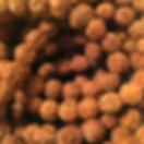 AA Rudraksha Seed.JPG