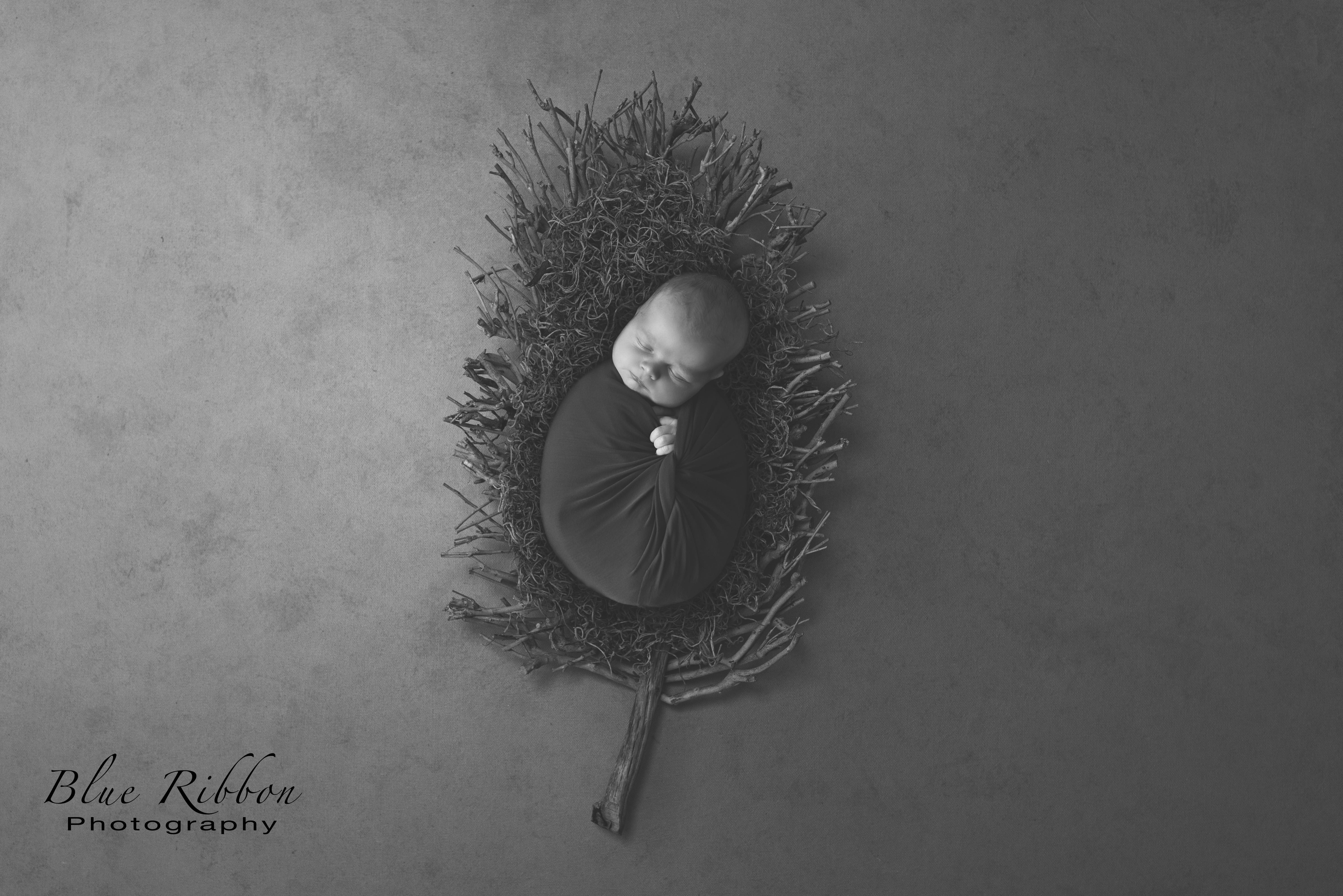 Karla Allen grey twig leaf-Edit