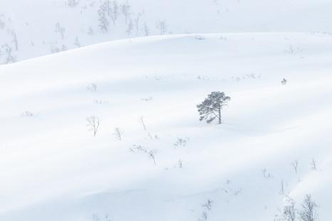 Laponie 2020 579 int a.jpg