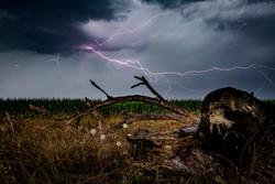 Thunder claws.jpg