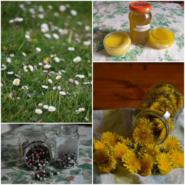 Plantes médicinales et comestibles