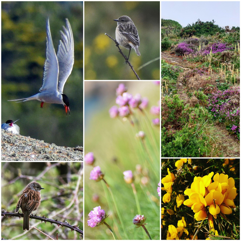 Flore et faune du littoral