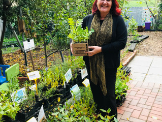 Annual Native Plants sale