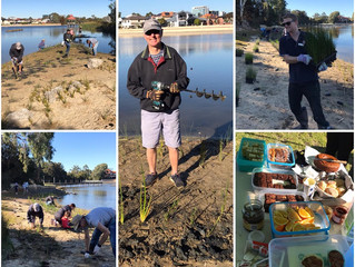 Friends of Maylands Lakes