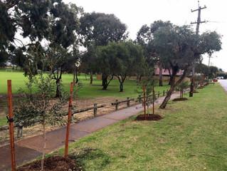 Winter tree planting!