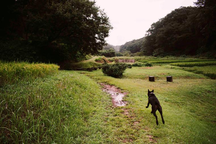 Daisukes Dog.jpg