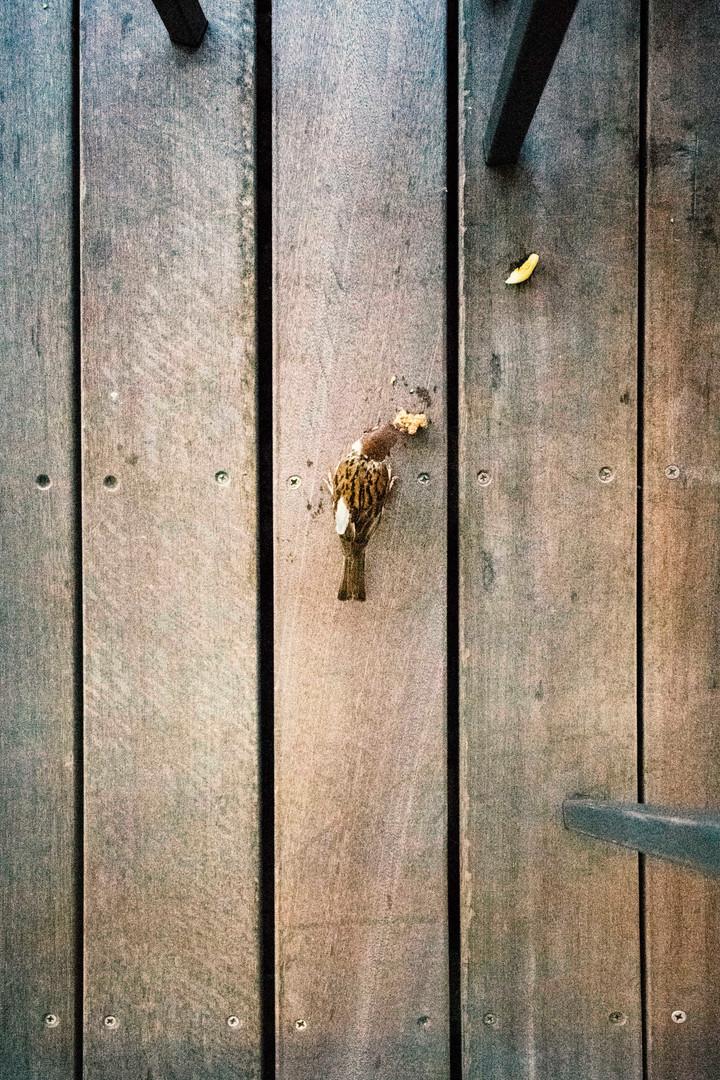 65 Bird.jpg