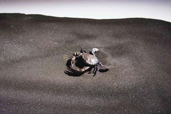 68 Crab.jpg