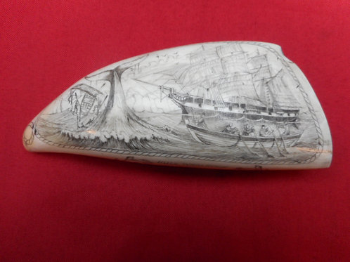 No. 347 - Huge whale tooth scrimshaw