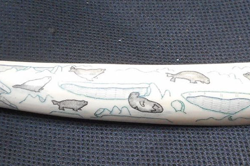 No.235 - Walrus tusk, signed and coloured