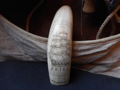 No. 353 - Tooth - the ship ARIEL