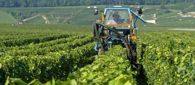 Deleafing machine - Vertus harvest 2016.