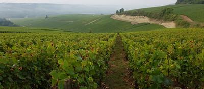 Le Champs du Clos, Celles-sur-Ource - Champagne Charles Dufour