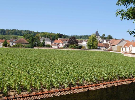 Clos de Mesnil - Krug