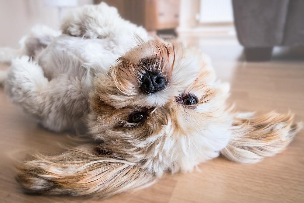 Dog on floor on lying on their back