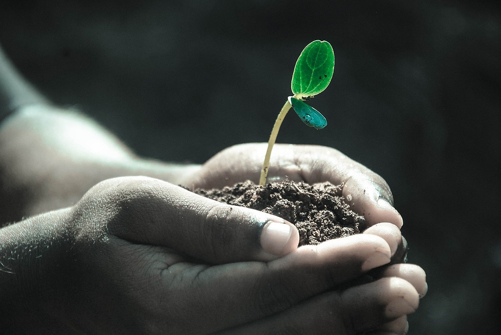 Image of hands holding soil with one sprouted plant