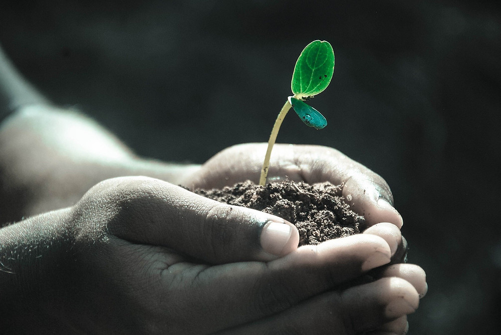 Hands holding dirt and a single plant growing out of it