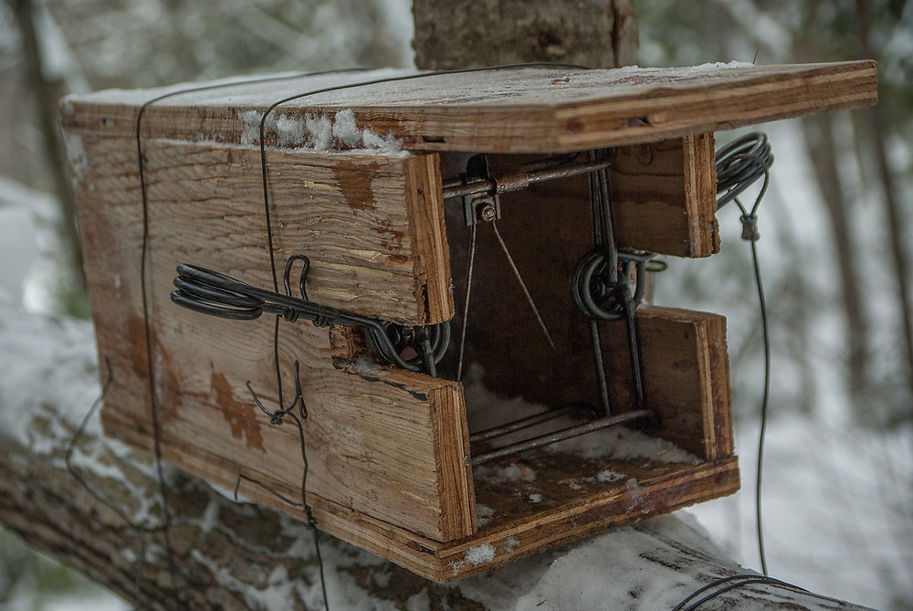 small animal wooden hunting trap, set on a tree limb, snow covering everywhere
