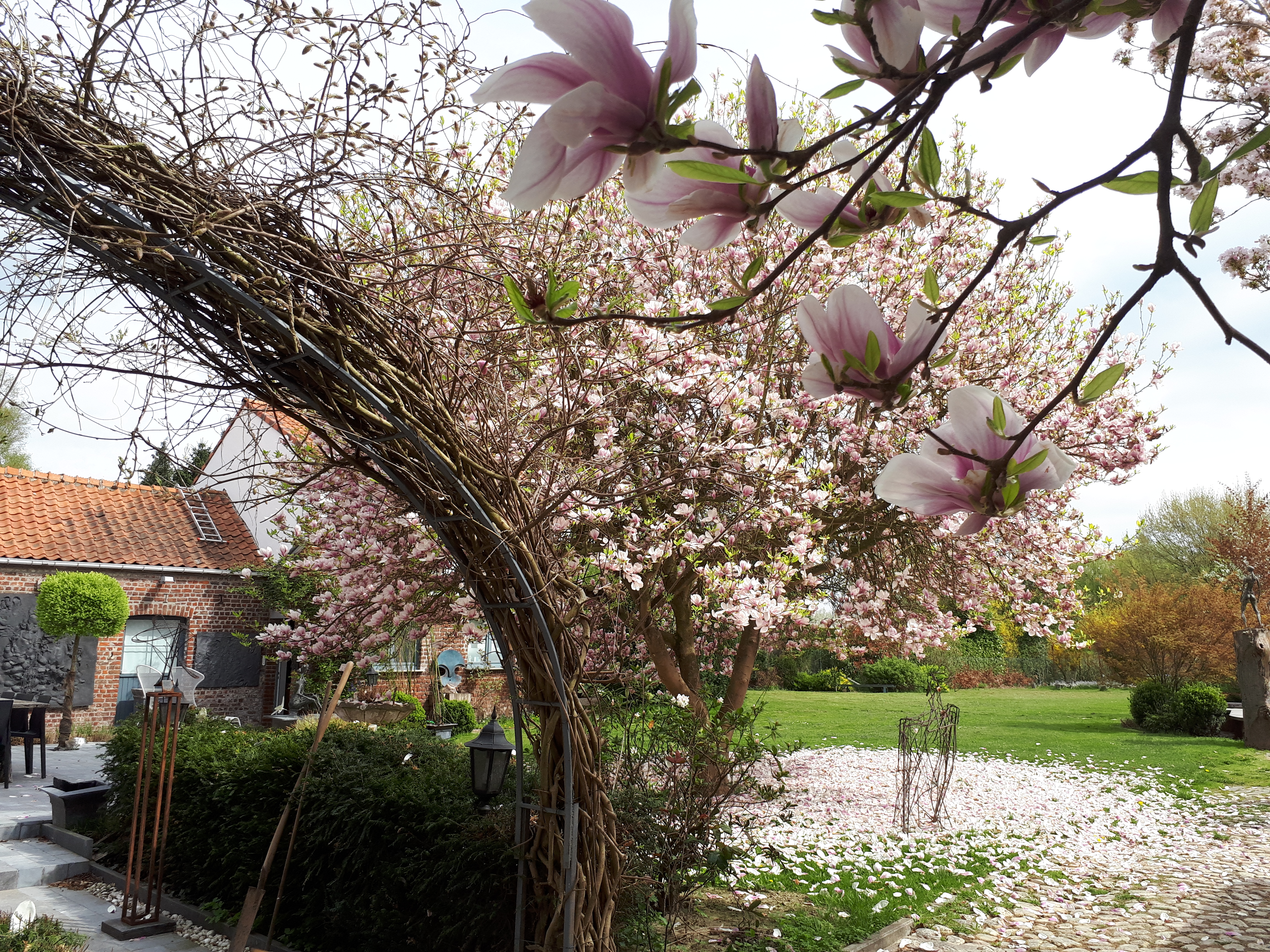 Glycine et Magnolia - Terre d'Eveil
