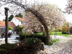 Vers jardin avec magnolia