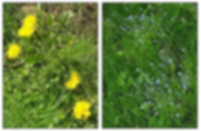 weeds.png