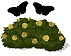 Polli_plant.png