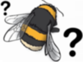 quizbee.png