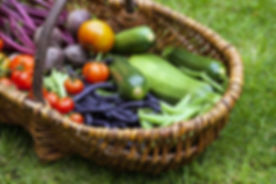allotment_vegetables.jpg