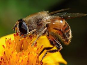 Pollinator Quiz