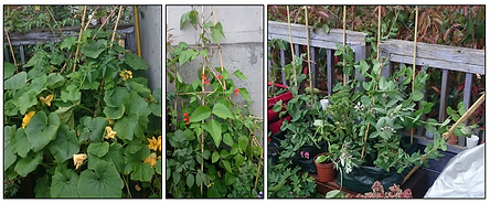 large plants.png