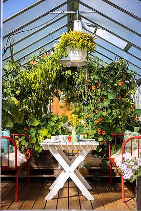 greenhouse vaxthus afternoon tea.jpg