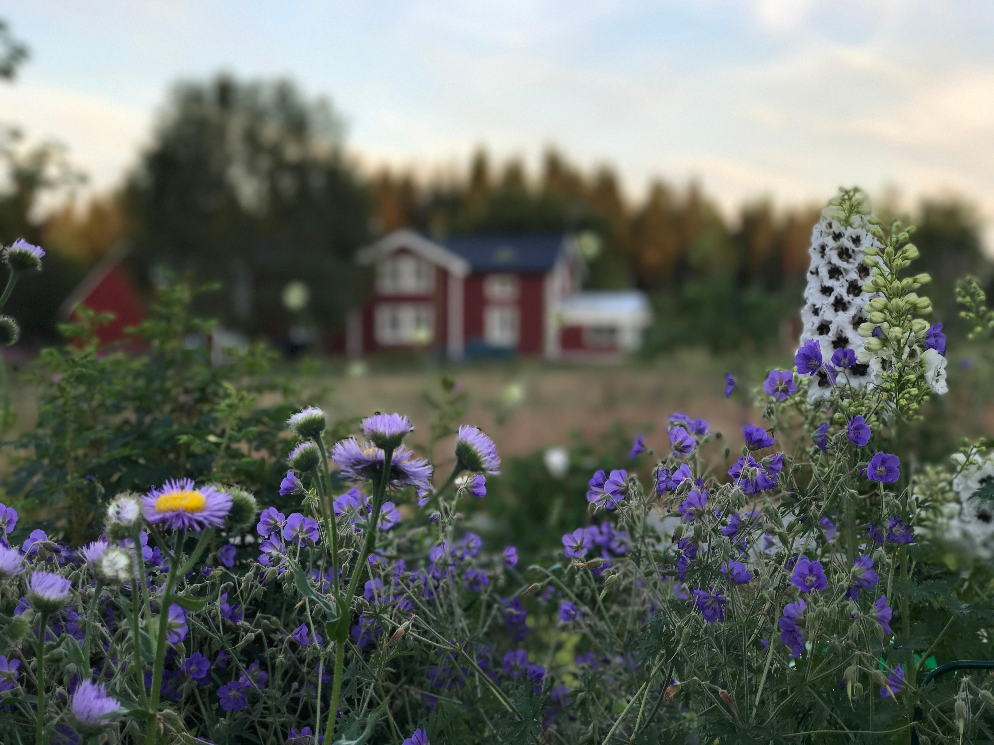 Trädgårdsskötsel på våren