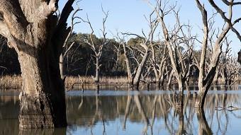wetlands-in-the-murray-darling-basin-dat