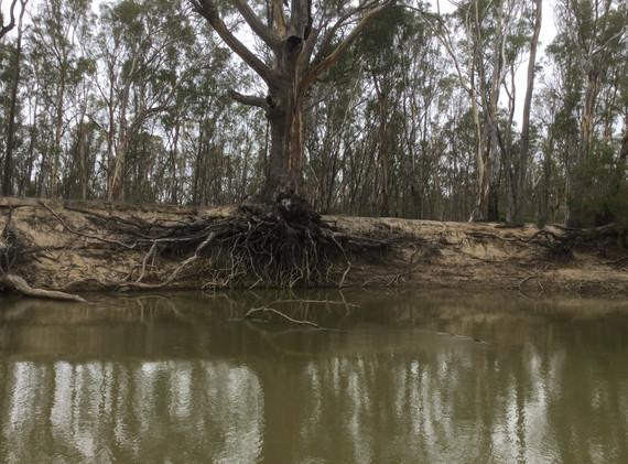 20km Upstream from Barham