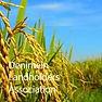 Denimein Landholders.jpg